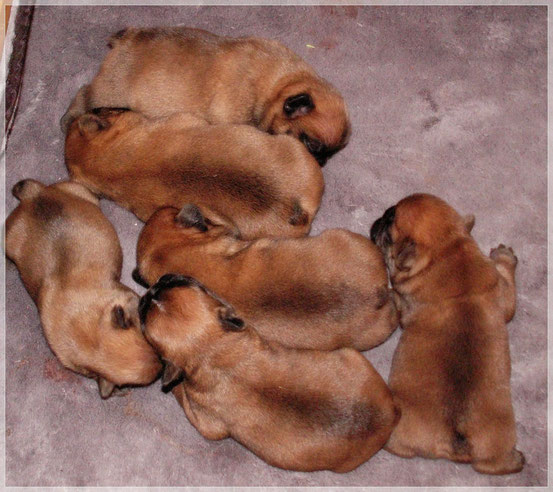 Puppy Contact frenchbulliesmontevista.jimdo.com