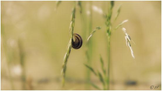 Die Schnecke & der Grashalm