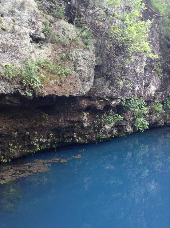 Blue springs. Es sieht aus als hätte jemand Tinte in das Wasser geshüttet. Das Loch ist tiefer als ein Football Feld.
