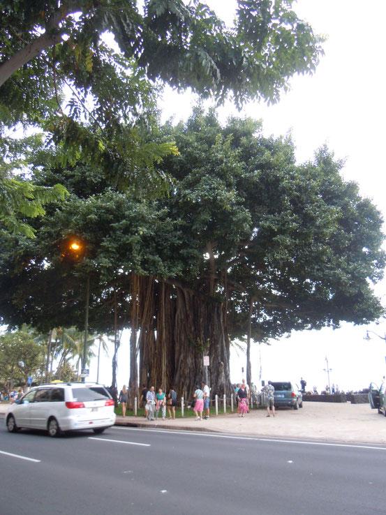 riesiger Baum