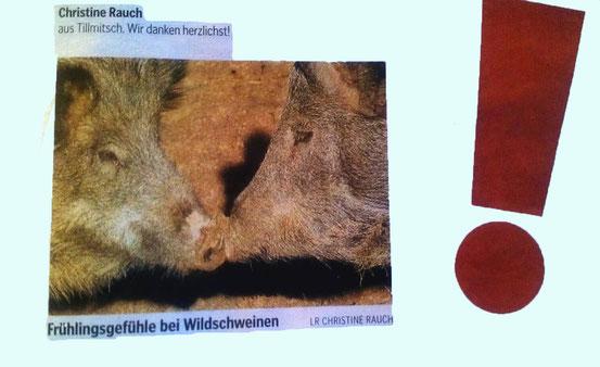 Kleine Zeitung Jänner 2012