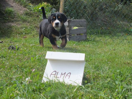 Alma von der Sunside Ranch ( Wurf 2014)