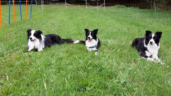 links Papa Paddy, in der Mitte Aviva und rechts Mama Suri