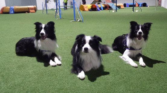 Cody, Paddy, Aviva