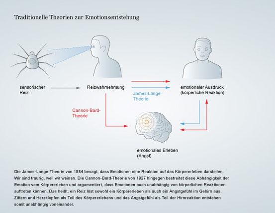 Die James-Lange-Theorie und die Cannon-Bard-Hypothese gehen von unterschiedlichen Wegen der Emotionsentstehung aus.
