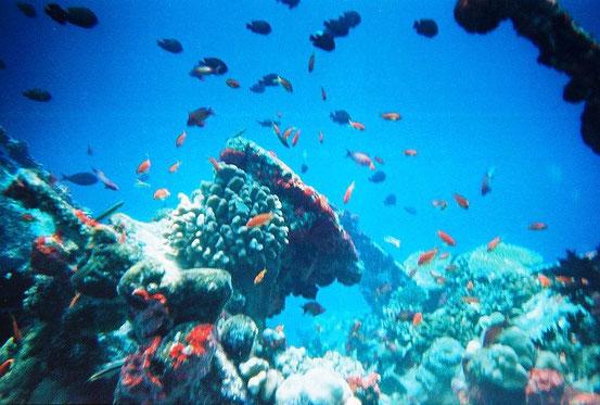 Fische und Korallenriffe vor den Malediven