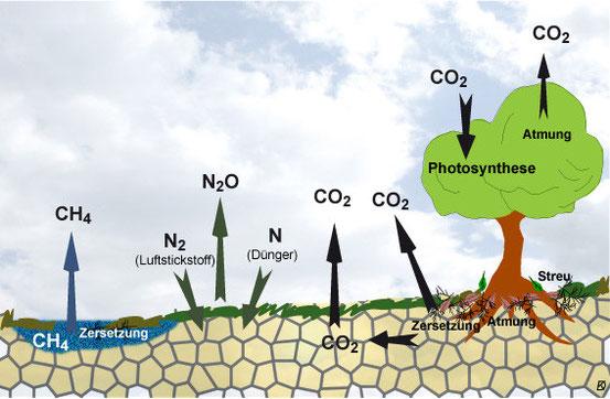 Der Boden als Speicher und Emittent von Treibhausgasen