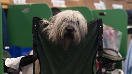 Adios relaxt... Crufts 2014. Die Crufts ist die grösste Hundeausstellung weltweit INFO: Link über das Bild