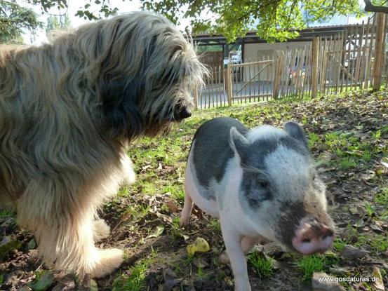Ben mit Minischweinchen Willi