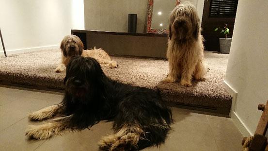 Die drei Babysitter