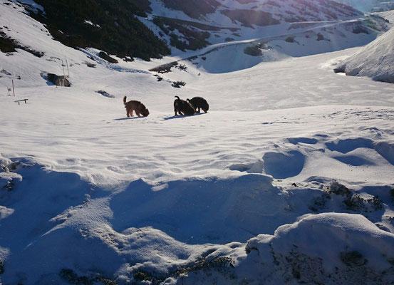 April 2015 am Arlberg