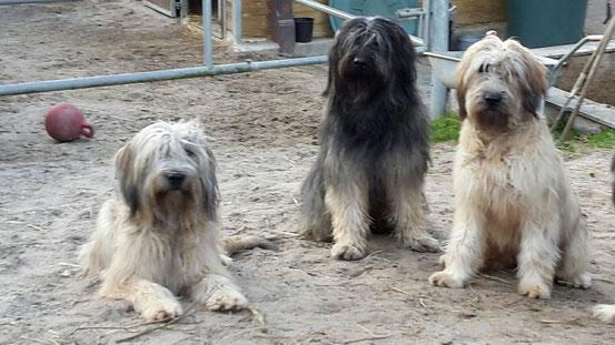 Bea, Dali und Carla
