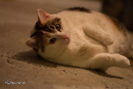 Die Fotovorlage von Katze Flecki