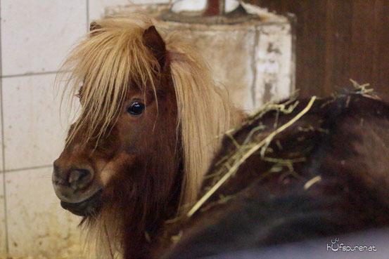 Engel lebt in der Tierarztpraxis Thurmading
