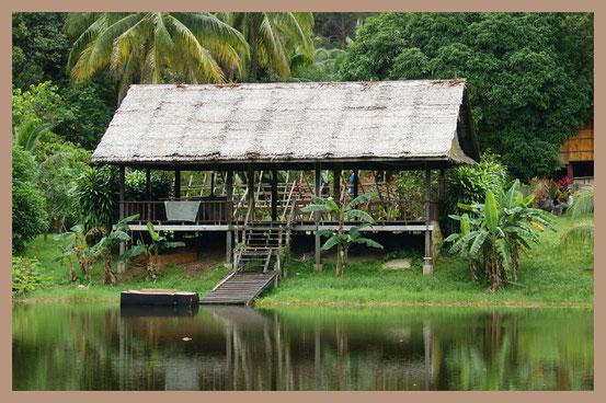 Regenwald auf Borneo