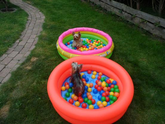 Und der zweite neue Pool musste auch noch her.