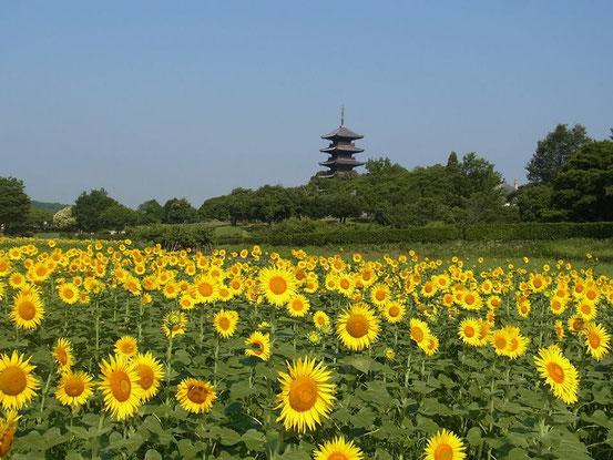 備中国分寺 五重塔