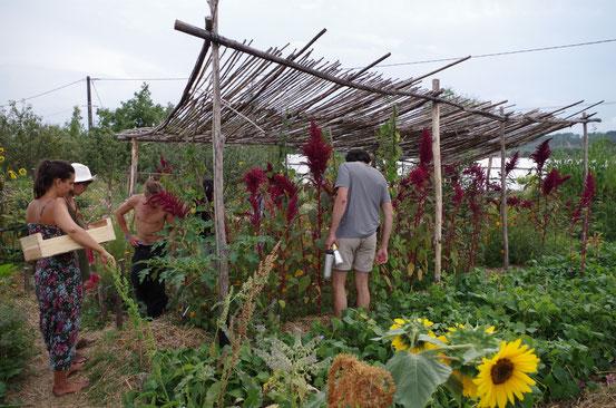 Visite de l'association Terre et Humanisme à Lablachère (Ardèche) - 8 août 2014