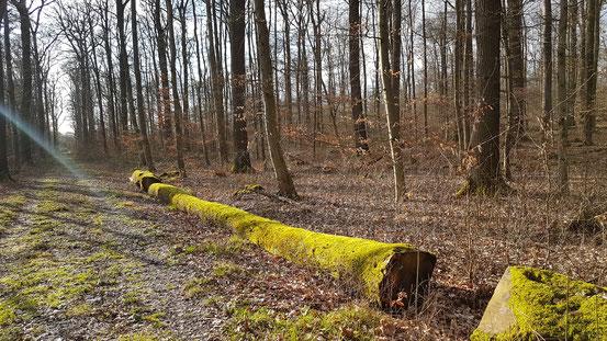 März 2020: Aufkommender Frühling im Eckendorfer Wald - fotografiert von M. Kammeier