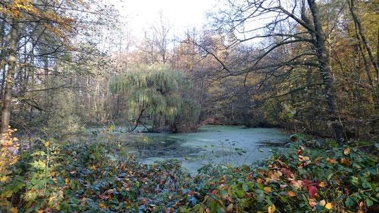 NOVEMBER 2019:               Herbststimnung am Nacke-Teich:                 fotografiert von Heidrun Schebaum