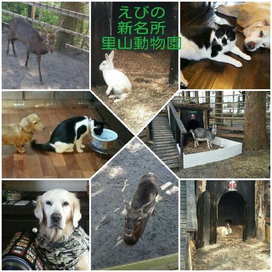 えびのの新名所❗里山動物園