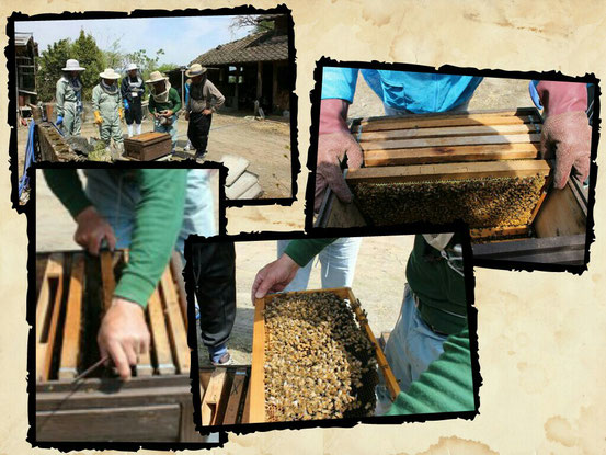 田の神さぁで好評販売中‼ えびのの名物 えびのの花で作った蜂蜜🐝 天然の純粋蜂蜜販売