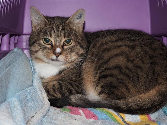 Diese hübsche Katzendame ist stellvertretend für alle 8 Samtpfoten abgebildet
