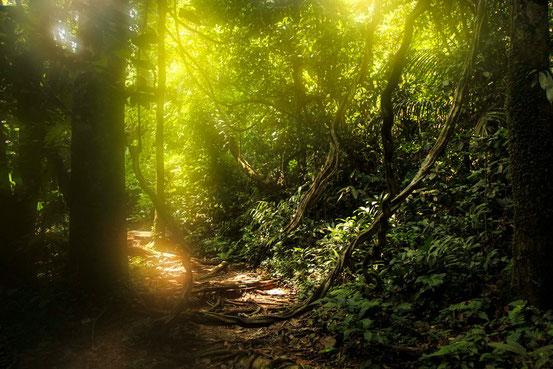 Beim Trekking im Taman Negara Nationalpark.
