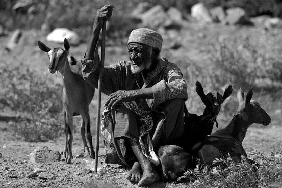 Alter Jebali mit seinen Ziegen.
