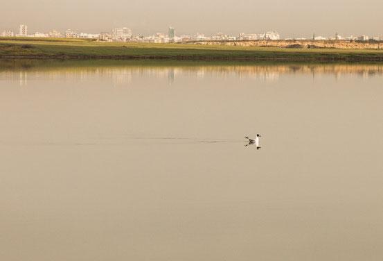 Möwe auf dem Salzsee von Larnaka.
