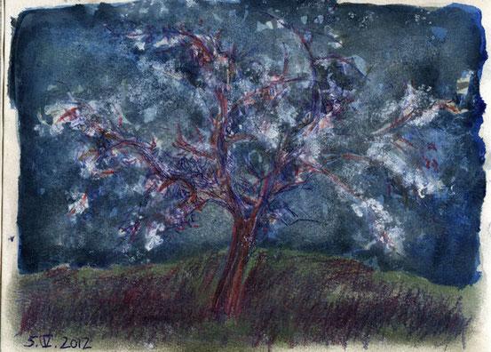 bloomimg apple tree