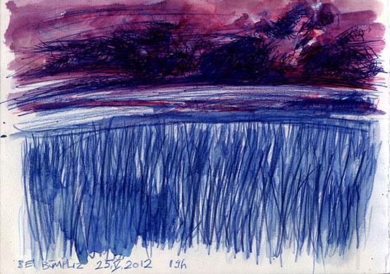 Fields in evening light