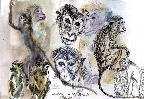 ... monkeys of Dambulla ... 2015.II.27 ...