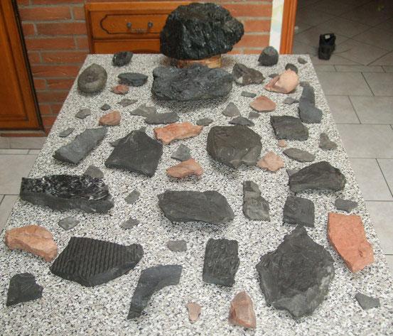 Gaillettes et fossiles sur schistes
