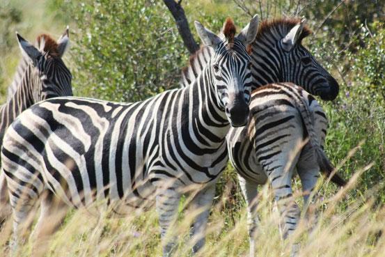 Kruger & Panorama Tour Add on Africa Volunteer Adventures