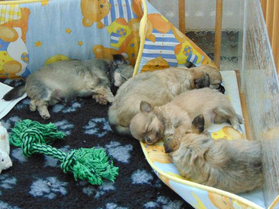 Die Umrandung ist anscheinend sehr bequem, eigentlich sollte sie schützen, aber drauf schlafen ist anscheinend schöner :-D