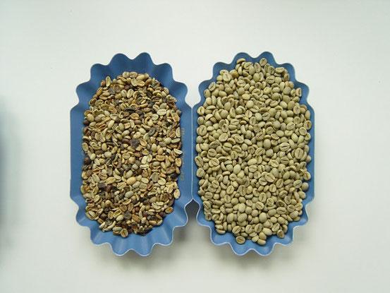 Links eine Arabica Bohne (mittlere Qualität) rechts Robusta Bohne