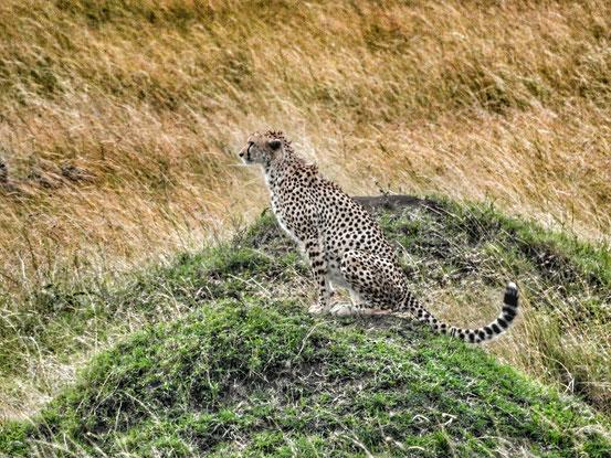 Masai Mara 2018
