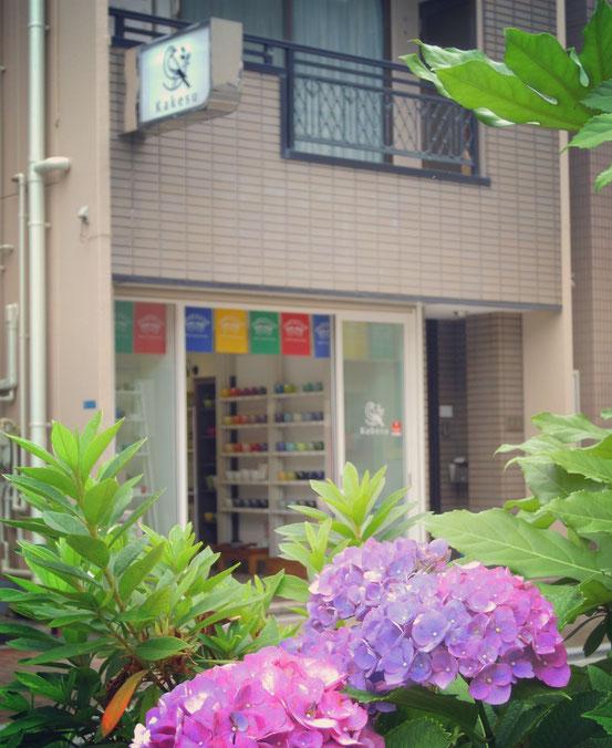 カケス雑貨店と紫陽花