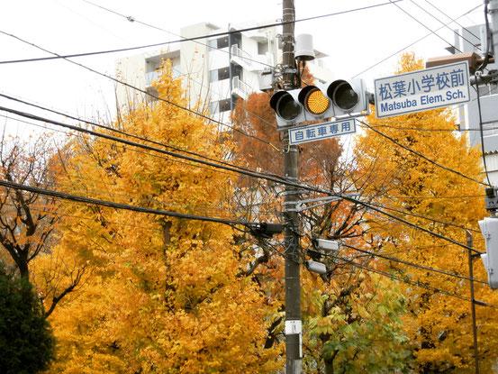 松葉公園の銀杏