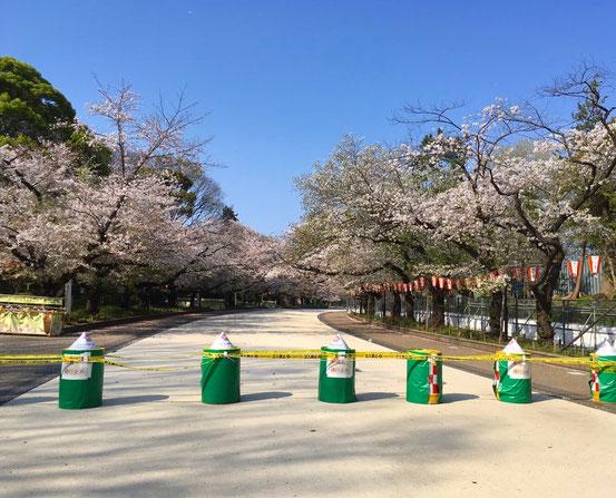 2020年4月3日の上野公園桜通り