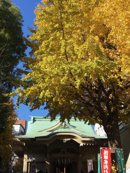 矢先稲荷神社の銀杏