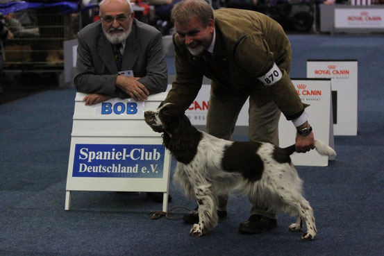"Lotta wins October 12th, 2012  the title ""Bundessieger"" in Dortmund, gets the CACIB and is BOB and qualified for Crufts! Photo: Felicitous"
