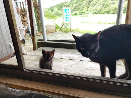 ビューティーの子供は来週めでたく旅立つ予定です。だいぶ猫らしくなりました。9月5日