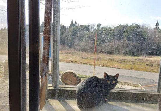 スリム。これだけ見ても他の黒猫と区別がつかないかもしれませんね。