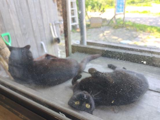 ナイトとビューティー。暑さで完全にだらけています。8月4日