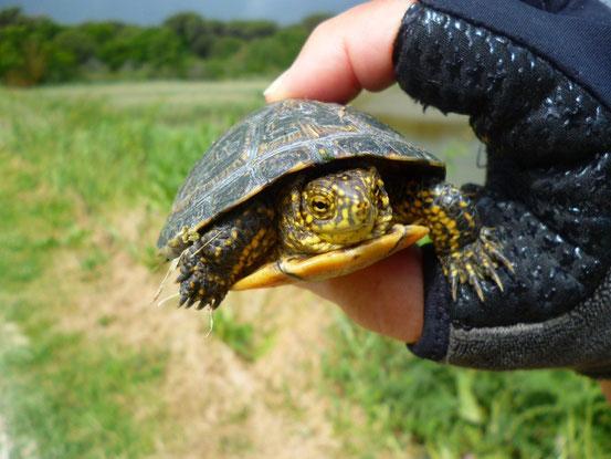 Wir werden von einer Schildkröte überholt