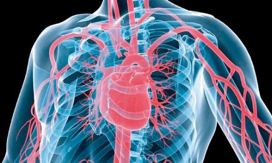 Les maladies cardiovasculaires constituent la première cause de mortalité dans le monde avec 17 millions de décès chaque année soit 30% de l'ensemble des décès dans le monde. 400 personnes par jour en France. Jésus avait annoncé des épidémies...