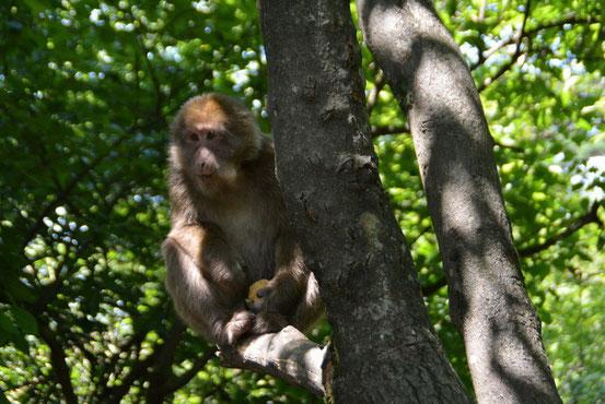 途中、野生のお猿さんにも遭遇できます。日本ではNGだと思いますが、ココではみんな平気でバナナなどの食べ物を与えています。