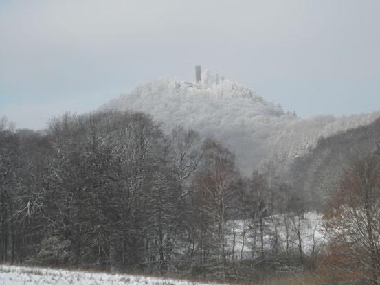 Klirrende Kälte im Winterwald